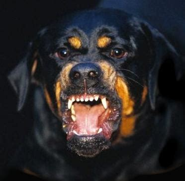 aggression thomas eibel