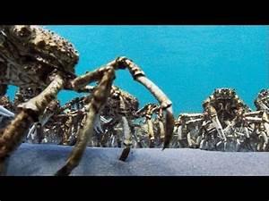 Se Débarrasser Des Araignées : une arm e d araign es de mer se d barrassent de leurs ~ Louise-bijoux.com Idées de Décoration