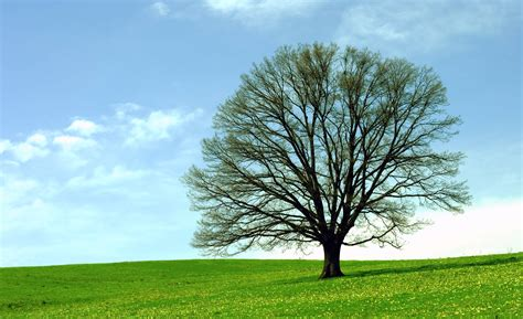 Tree Of Images Oak Tree Wallpapers Wallpaper Cave