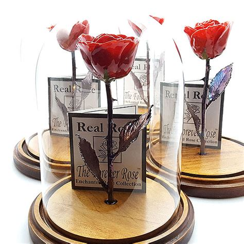 beauty   beast  rose collection