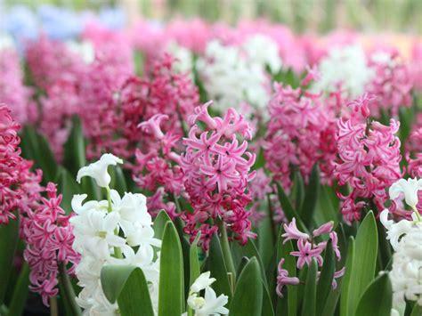 Tips For A Beautiful Flower Garden