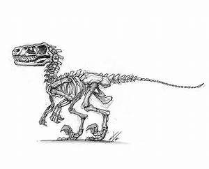 17 Best images about skeleton drawings... on Pinterest ...