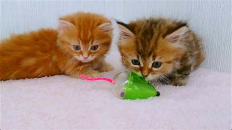 cute baby kittens playing wallpapers gallery