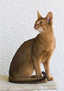 Top 30 Cat Breeds | PetHelpful