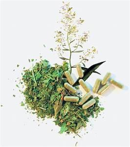 Plante Detoxifiante : plante de maylis plante drainante et d toxifiante ~ Melissatoandfro.com Idées de Décoration