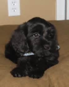 dog breeds low shedding dog breeds top breeds of dogs mid