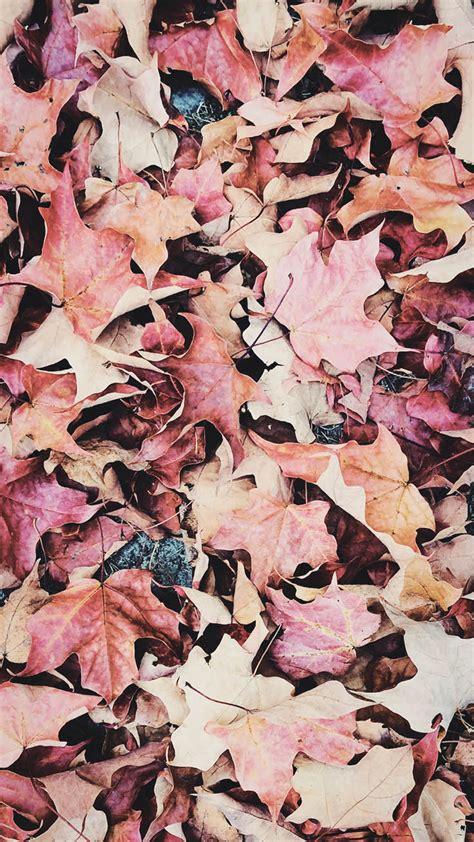 Download free .mobile phone. .wallpaper. .autumn.. Aesthetic Autumn Wallpaper Iphone