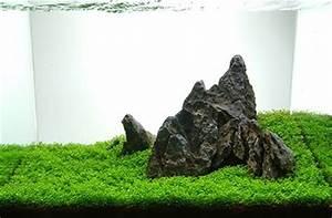 Moos Für Aquarium : aquaristik fun ~ Frokenaadalensverden.com Haus und Dekorationen