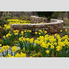 Serpentine Woodland Wall Amongst Daffodils  Traditional  Landscape  New York  By The Todd Group