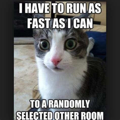 Weird Cat Meme - 30 most funniest sad meme pictures that will make you laugh