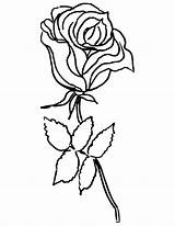 Coloring Rose Flower Roses Pages Printable Pretty Drawing Aster Flowers Getcoloringpages Clipartmag Popular sketch template