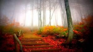 Misty, Autumn, Morning