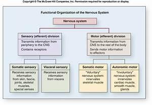 Nerve Guides