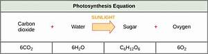 Overview of Photosynthesis | Boundless Biology