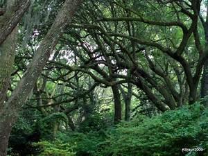 TrekNature | Arboreal Arms Photo