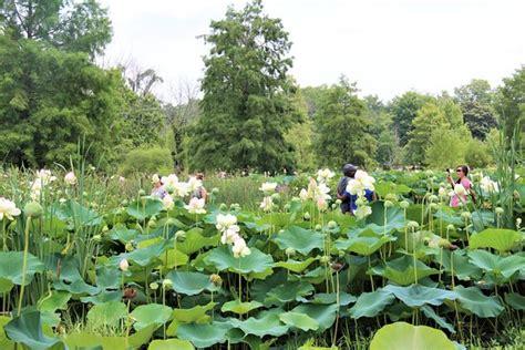 kenilworth aquatic gardens kenilworth park and aquatic gardens washington dc top