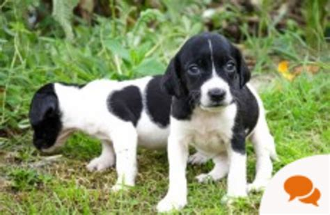 column running  dog rescue centre doesnt involve