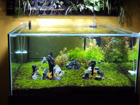 led aquarium lighting planted tank led aquarium lighting blog orphek planted tank lit by