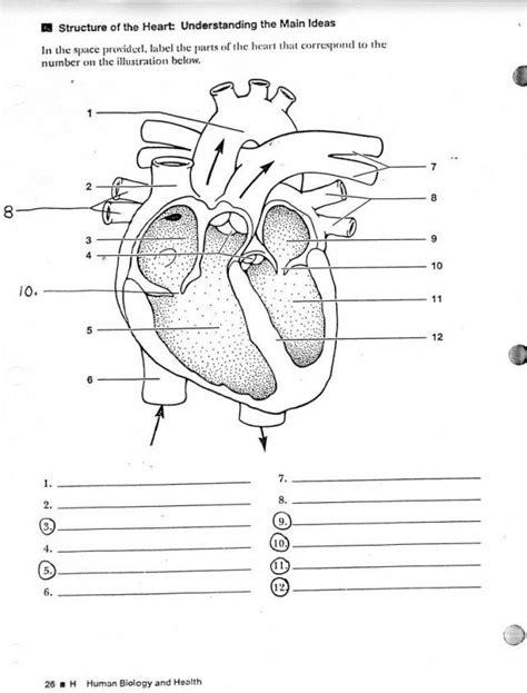human anatomy worksheets koibanainfo heart diagram