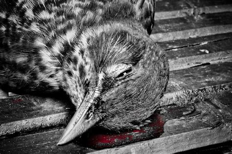 Dead Bird Symbolism  London Photographer  Pictures From