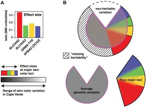 Eye Color Genetics Chart Percentages