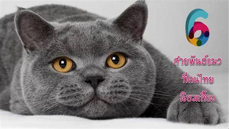 6 สายพันธ์แมวที่คนไทยนิยมเลี้ยง - YouTube