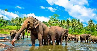 Lanka Sri Tour Trutravels Uncovered Package Packages