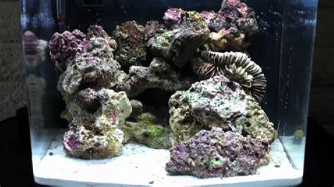 saltwater aquascape biocube 14 gallon aquascape nano saltwater reef tank