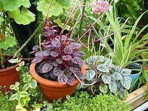 Pflege Von Zimmerpflanzen : d ngen pflege von zimmerpflanzen zimmerpflanzen zimmer und gartenblumen ~ Markanthonyermac.com Haus und Dekorationen