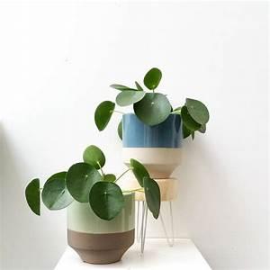 Grande Plante D Intérieur Facile D Entretien : les 25 meilleures id es de la cat gorie plantes vertes sur ~ Premium-room.com Idées de Décoration