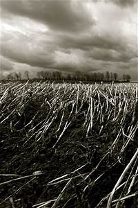 Black And White Crop Field - Farm Landscape Mobile ...