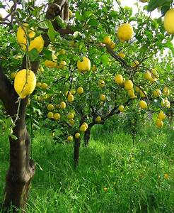 Lemons In 2019