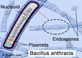 Eubacteria Examples