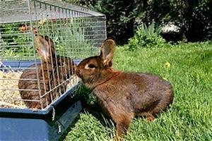 Katze Erbricht Oft : kaninchen infos tipps und viele s e bilder ~ Frokenaadalensverden.com Haus und Dekorationen