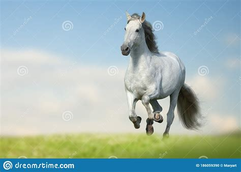 running horse andalusian fast wild sky field galloping maned grass
