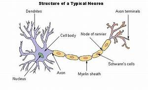 Neuron Label