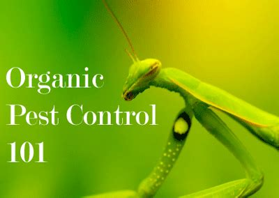 Organic Pest Control For Gardens  The Adventures Of