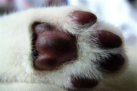 generic species    paw pads