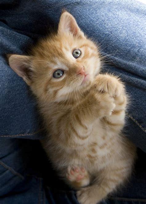 Cute Cat  37 Pictures  Funny Cat Dompictcom