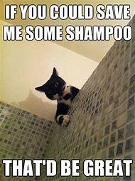 Human Cat Meme