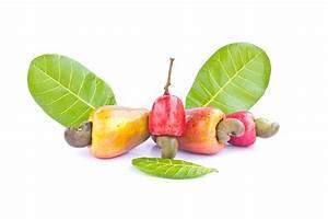 Cashew Nut Fruits Photograph by Amornthep Chotchuang