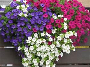 Blumen giessen balkonbewasserung giesskanne oder for Markise balkon mit tapete pink blumen