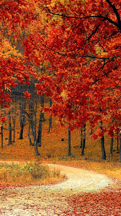 Autumn Hd Wallpapers For Mobile by Beautiful Autumn Road Trees Free 4k Ultra