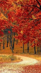 Beautiful, Autumn, Road, U0026, Trees, 4k, Ultra, Hd, Mobile, Wallpaper