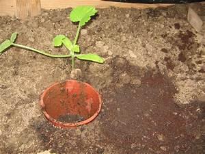 Pferdemist Für Tomaten : kaffeesatz als d nger f r tomaten im gew chshaus m ein gew chshaus selber bauen ~ Watch28wear.com Haus und Dekorationen
