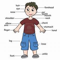 Body Part Songs  Human Bodysenses  Vocabulary, Learn English, English Vocabulary