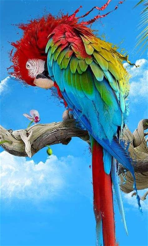 Live Animal Wallpaper For Mobile - hd wallpaper for pc and mobile colour parrot birds