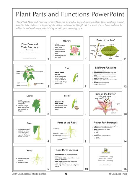 parts of a plant worksheet for middle school parts best
