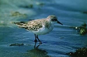 Swan Estuary Marine Park - TripAdvisor