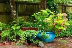 Farn Im Garten : farn steht er unter naturschutz ~ Orissabook.com Haus und Dekorationen
